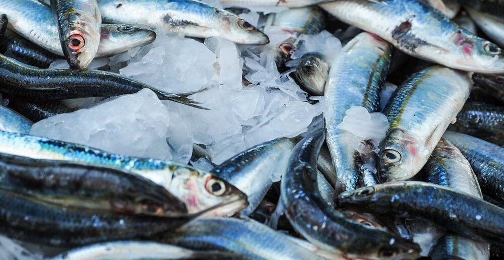 Farm-to-fork seafood traceability in quest of enabling food safety