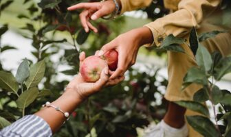 Design fruit traceability for the growth of agricultural supply chain