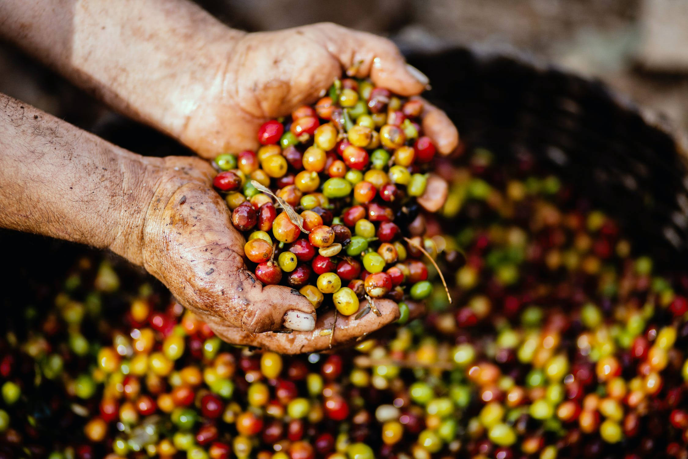 Blockchain traceability solutions for the coffee supply chain's equality